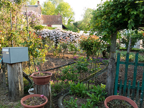 Naighbouring flower garden with clematis.   by Elise de Korte