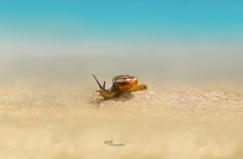 Snail moving across sand on beach
