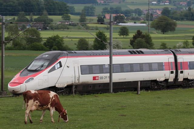 SBB Neigezug Cisalpino due ETR 610 bzw. RABe 503 ( ETR italienisch ElettroTreno Rapido - Hersteller Alstom - 2 Serie - Inbetriebnahme um 2014 - Triebzug Zug ) unterwegs zwischen Gümligen und Rubigen im Kanton Bern der Schweiz
