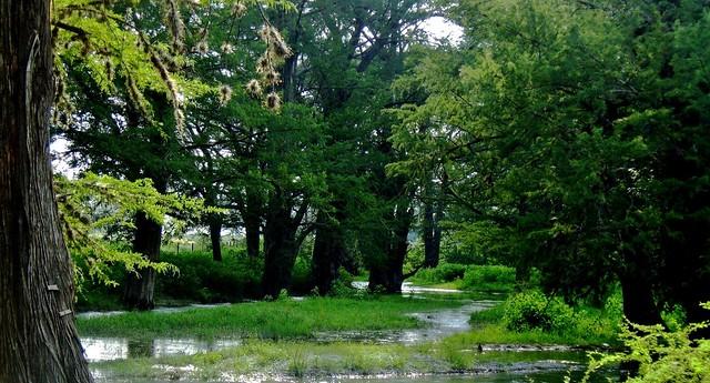 Remanso en el Ríó Álamo/Backwater in Alamo River.