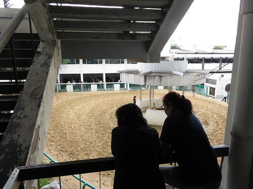 ロイヤルターフクラブ競馬場の装鞍所をのぞき込む人々
