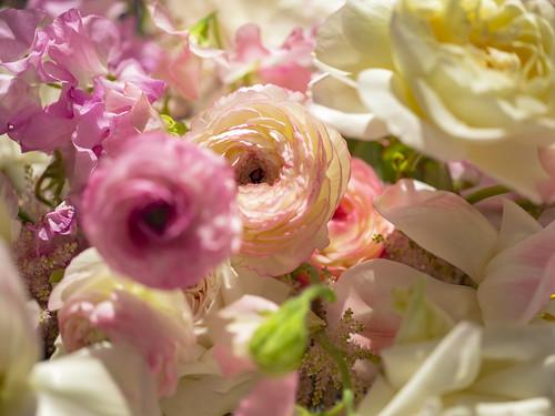 Flowers   by stockcatalog