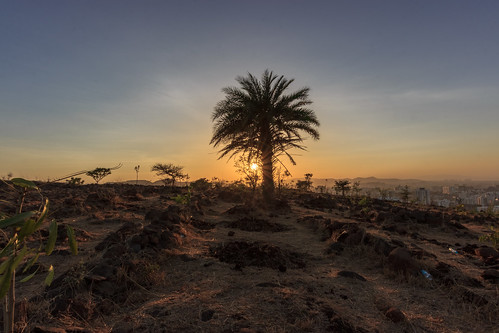 dusk hill hilltop landscape nature outdoor palmtree rays rocks sun sunset tree twilight