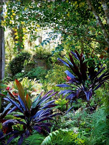 towardstheferngrotto sugarmillgardens portorangeflorida ferngrotto tropicalplants ferns foliage florida garden outdoors nature scenic landscape