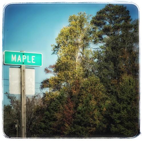 Maple dell vt