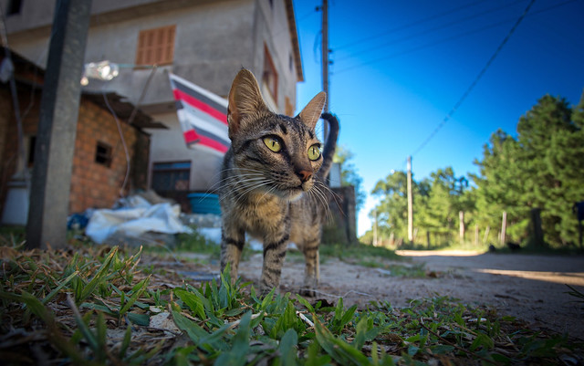 Gatinha do Mato (Wild Pussycat)