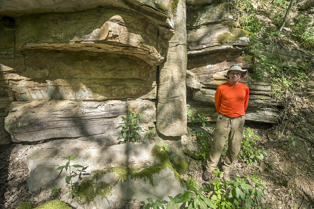 Lycopod fossil, Tom Dunigan, Morgan County, Tennessee