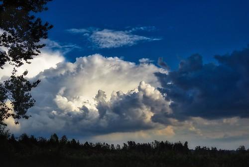 landscape cloud tree trees clouds drama bluesky darkcloud