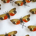 APHIS Administrator Kevin Shea visits Spotted Lanternfly staff in PA