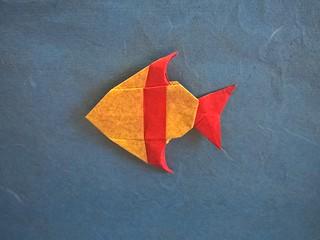 Banded Angelfish (R.J. Lang) | by Helyades