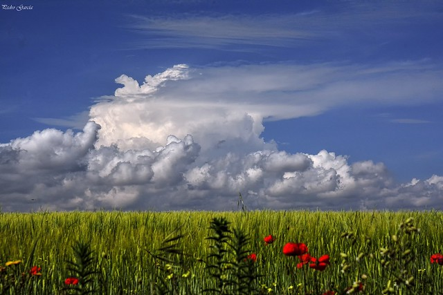 Clouds and Spring fields