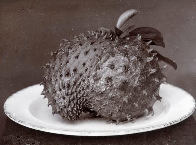 Carl C. Lyon - Soursop Fruit, ca 1890
