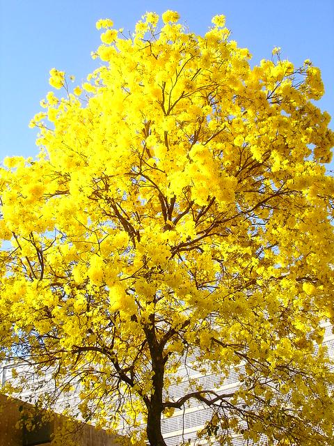 a coisa mais amarela do mundo | rafael | Flickr