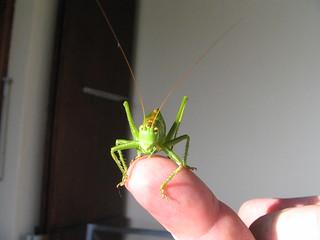 Grasshopper! | by Stephanie Booth