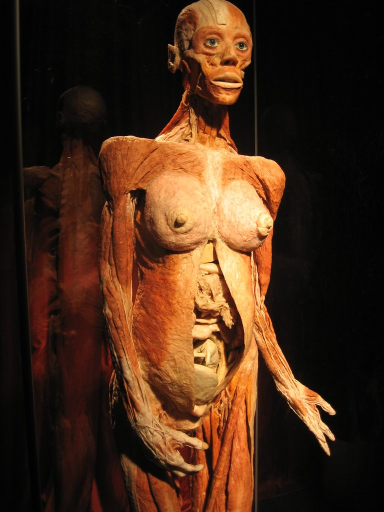 The Pregnant Woman Body Worlds 2 Boston Ma This Woman D Flickr