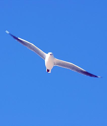 Wingspan | by Long Zheng