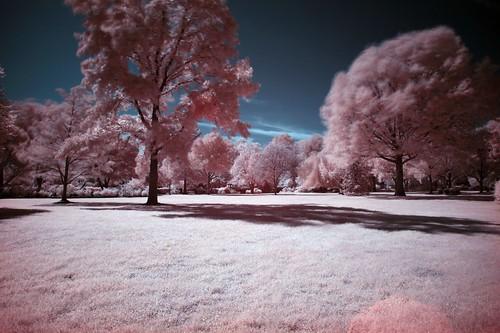 tree grass landscape columbia missouri infrared sheltergardens canoneos5d