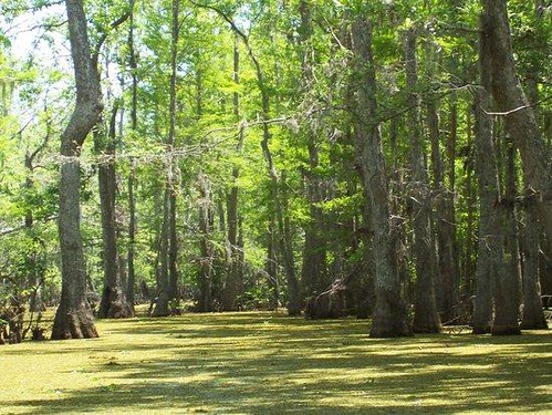 Honey Island Swamp, Outside New Orleans