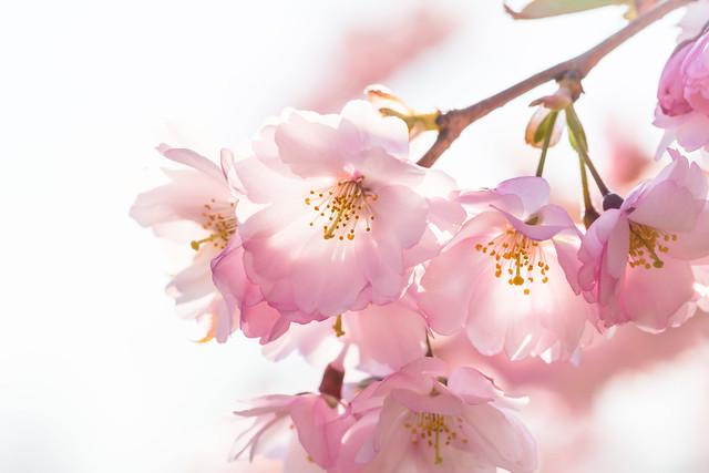 The essence of Springtime