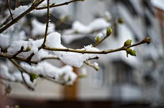 may-tree02 | by Chawoosh N