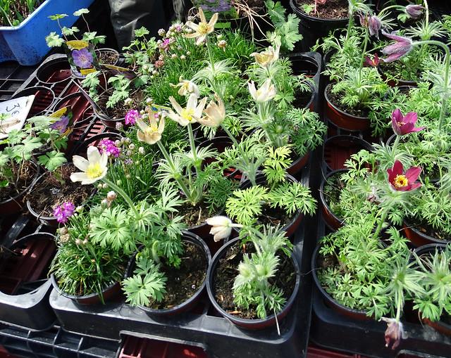 Mercado de Flores y plantas Mons Belgica 11