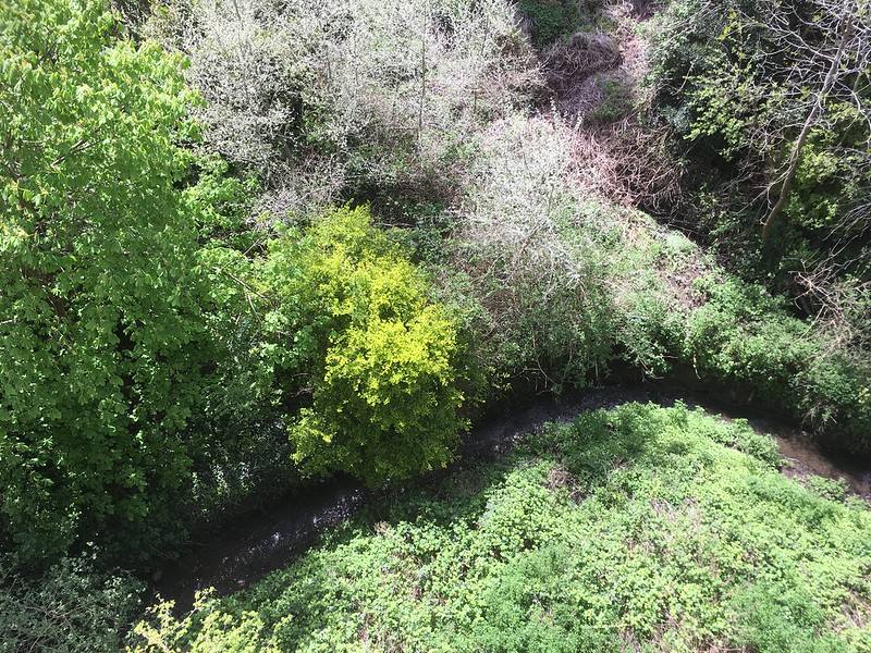 Looking down at Coombe Brook from the Royate Hill Nature Reserve viaduct