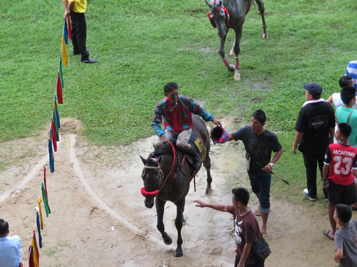 レースを終えた馬たち