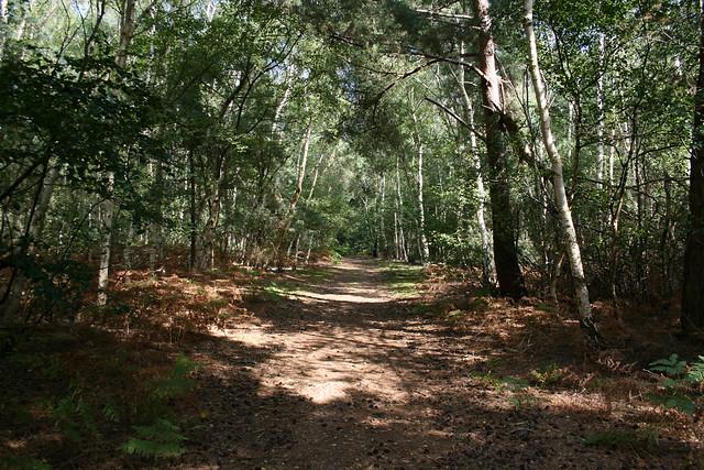 Black Heath Wood near Snape