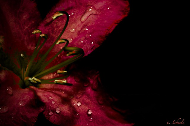 A mystical flower in Low Key - dramatic and moody.