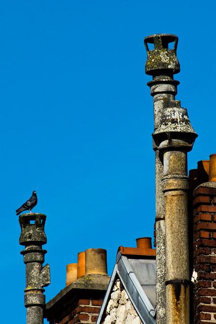 pigeontoit