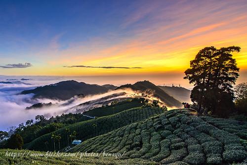 碧湖山 夕陽 雲海 彩霞 茶園 雲瀑 山岳 樹木 過山雲 風景 色溫 霞光 電塔 36彎 日落 黃昏