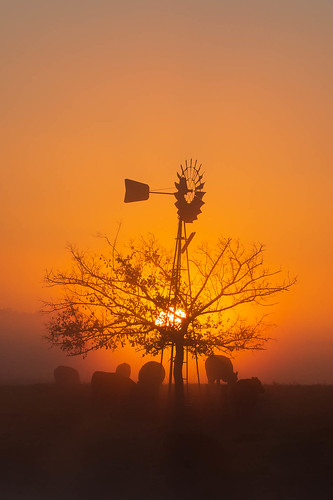 richmondlowlands newsouthwales australia au richmond windmill cow sunrise dawn orange sydney nsw silhouette