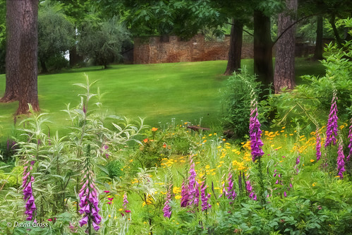 flowergarden foxgloves landscape motherlode mine empiremine grassvalley topazsw canonef24105mmf4lisusm canon5dmarkiii nevadacounty lightroom6