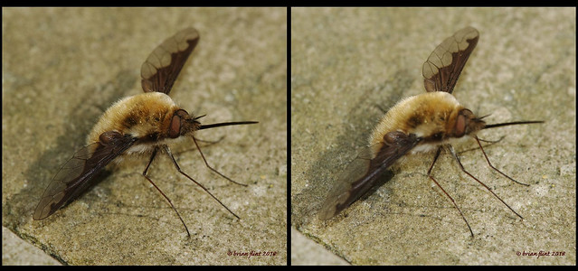 Beefly - 3d cross-view