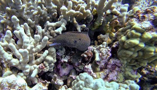 Hawaii diving