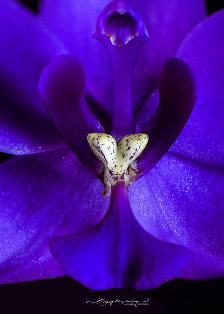 Anatomy of a flower.....