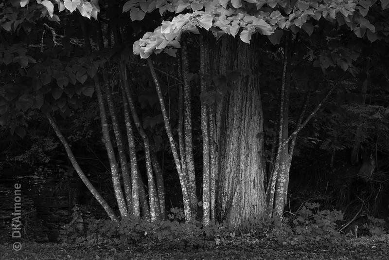 Grove of Trees, Edge of Wood