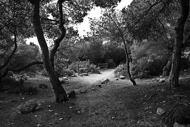 paseo por el interior del bosque