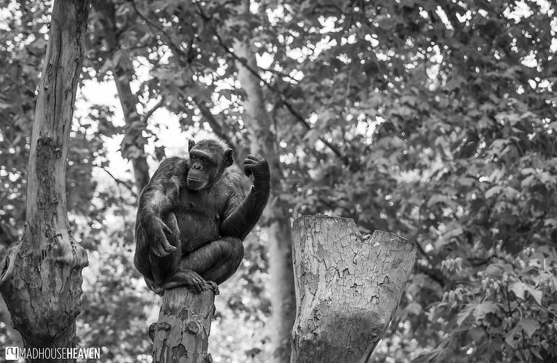 Barcelona Zoo - 0107