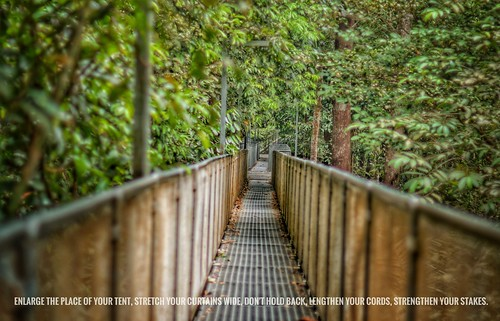 j316 forest bridge tropical sony leaves hdr fresh cool jungle kedah sedim malaysia isaiah scripture eventsportraiture freelance allenwarrengmailcom