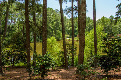 smack53 clemson clemsoncollege southcarolina southcarolinabotanicalgarden trees scenic outside outdoors water summer summertime nikon d3100 nikond3100