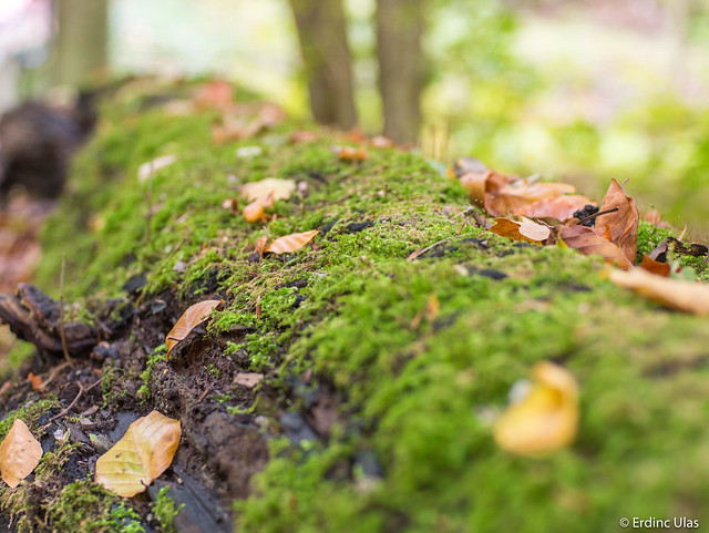 Moss focus in the forest