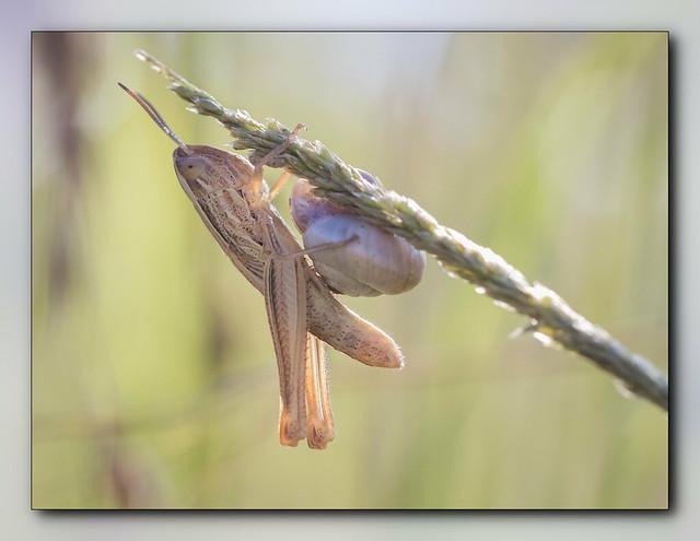Le criquet et l'escargot