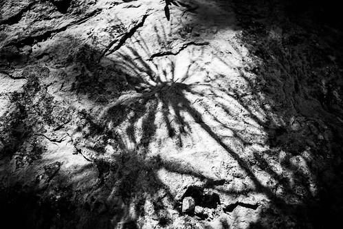 monochrome black white shadows