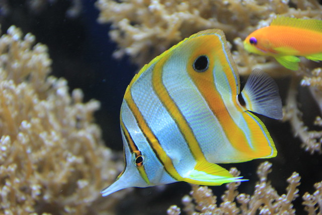 Butterfly Tang.