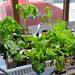 Rendez-vous des jardiniers urbains de Montréal