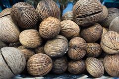 Buddha Palm nuts