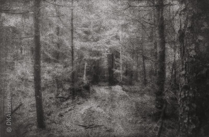 Monhegan Forest