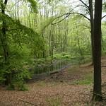 Feuchter Waldbereich im NSG Tippelsberg/Berger Mühle