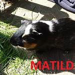 20140417_105951 Matilda